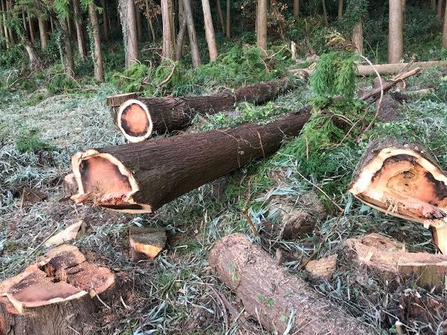 懸案の畑上のスギの架かり木など伐採:10:28六国見山手入れ⓵_c0014967_10392510.jpg