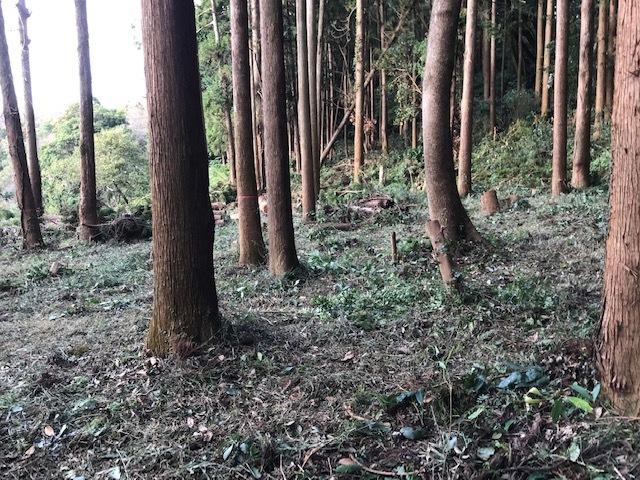 懸案の畑上のスギの架かり木など伐採:10:28六国見山手入れ⓵_c0014967_10474558.jpg
