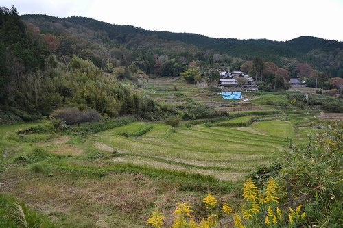 心が和む原風景、長谷の棚田_b0102572_11144152.jpg