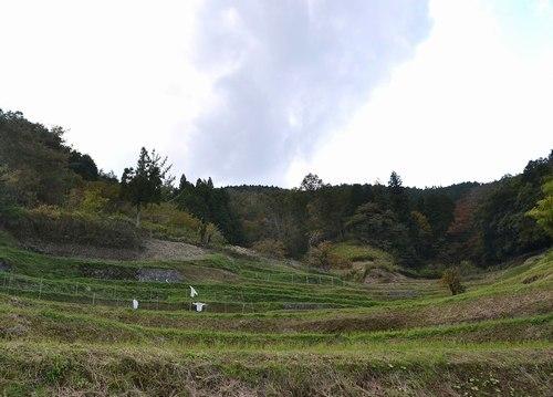 心が和む原風景、長谷の棚田_b0102572_11150222.jpg