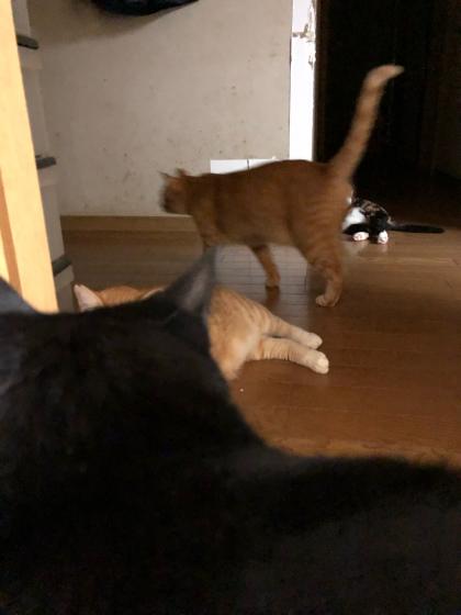 猫ごっちゃり_e0355177_00325398.jpg
