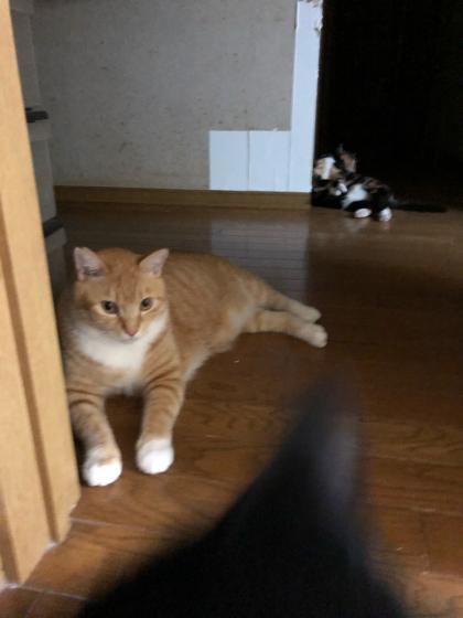 猫ごっちゃり_e0355177_00325488.jpg