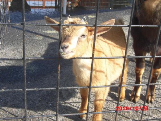 移動動物園のお客さま_b0231886_19230666.jpg