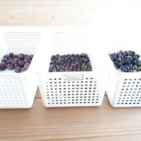 オリーブ収穫!_a0046888_00343402.jpg