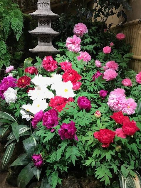 日本庭園 由志園_f0204295_16452745.jpg