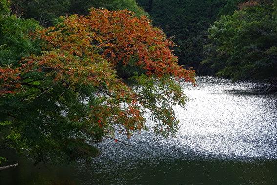 ブチ紅葉が楽しめる榊原温泉_b0145296_21283376.jpg