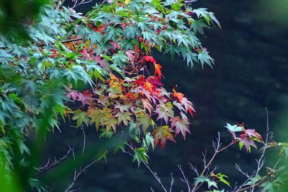 ブチ紅葉が楽しめる榊原温泉_b0145296_21283693.jpg