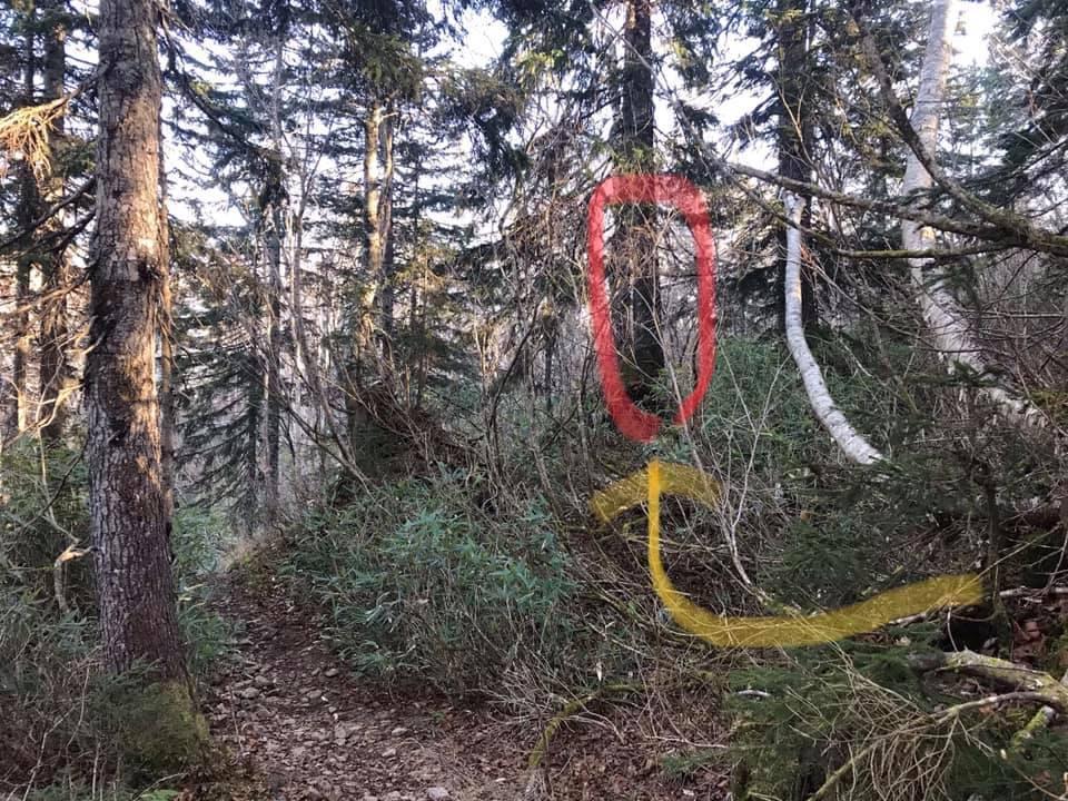 山友が空沼岳で熊に遭遇_f0138096_22462322.jpg