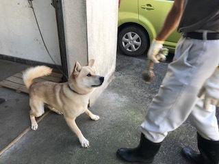 【犬・移動先募集】センター(支所)収容(10/28訪問)_f0242002_09310272.jpg