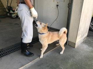 【犬・移動先募集】センター(支所)収容(10/28訪問)_f0242002_09311332.jpg