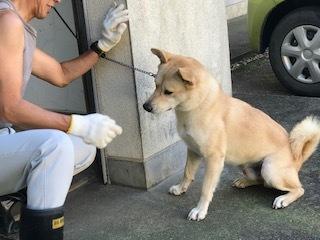 【犬・移動先募集】センター(支所)収容(10/28訪問)_f0242002_09480844.jpg