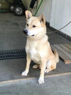 【犬・移動先募集】センター(支所)収容(10/28訪問)_f0242002_09481545.jpg