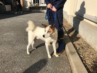 【犬・移動先募集】センター(支所)収容(10/28訪問)_f0242002_09484330.jpg