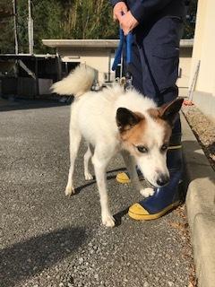 【犬・移動先募集】センター(支所)収容(10/28訪問)_f0242002_09484855.jpg