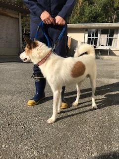 【犬・移動先募集】センター(支所)収容(10/28訪問)_f0242002_09485529.jpg