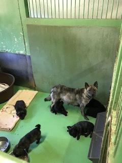 【犬・移動先募集】センター(支所)収容(10/28訪問)_f0242002_09503035.jpg