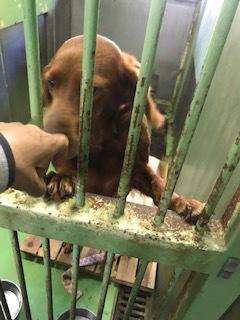 【犬・移動先募集】センター(支所)収容(10/28訪問)_f0242002_09503512.jpg