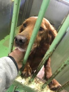 【犬・移動先募集】センター(支所)収容(10/28訪問)_f0242002_09510416.jpg