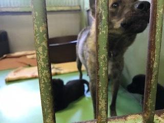 【犬・移動先募集】センター(支所)収容(10/28訪問)_f0242002_09521928.jpg