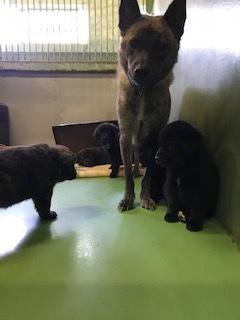 【犬・移動先募集】センター(支所)収容(10/28訪問)_f0242002_09523401.jpg