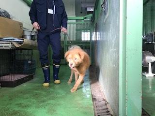 【犬・移動先募集】センター(支所)収容(10/28訪問)_f0242002_09551529.jpg