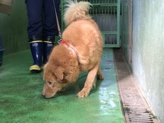 【犬・移動先募集】センター(支所)収容(10/28訪問)_f0242002_09552612.jpg
