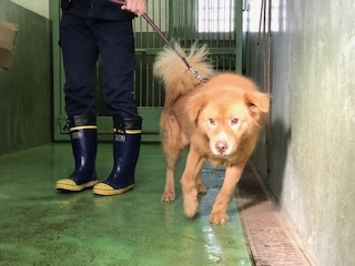 【犬・移動先募集】センター(支所)収容(10/28訪問)_f0242002_09553475.jpg