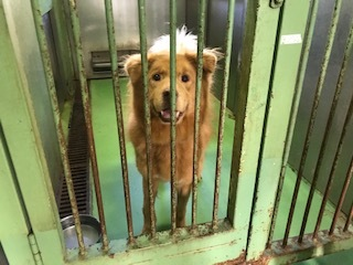 【犬・移動先募集】センター(支所)収容(10/28訪問)_f0242002_09555359.jpg