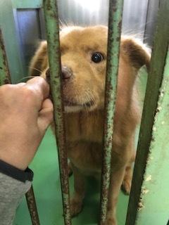 【犬・移動先募集】センター(支所)収容(10/28訪問)_f0242002_09560760.jpg