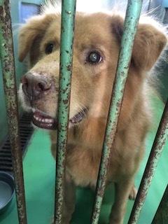 【犬・移動先募集】センター(支所)収容(10/28訪問)_f0242002_09561325.jpg