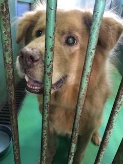 【犬・移動先募集】センター(支所)収容(10/28訪問)_f0242002_09562570.jpg