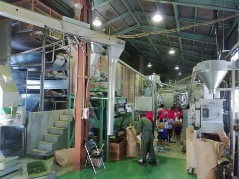 沼津で初の碾茶工場を見学!_d0050503_21073200.jpg