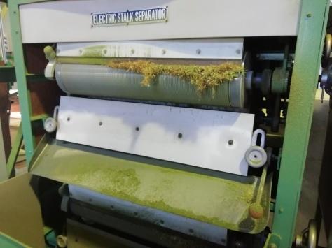 沼津で初の碾茶工場を見学!_d0050503_21085333.jpg