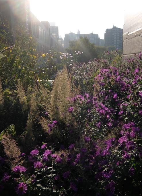 空中公園ハイラインで見かけた秋の植物_b0007805_05465986.jpg