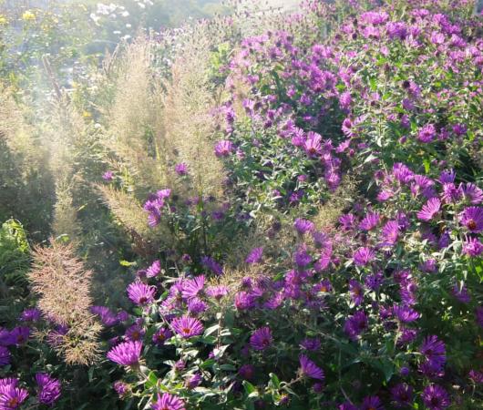 空中公園ハイラインで見かけた秋の植物_b0007805_05551621.jpg