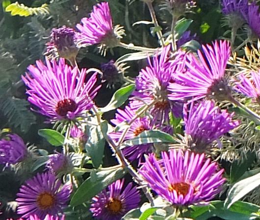 空中公園ハイラインで見かけた秋の植物_b0007805_05561056.jpg