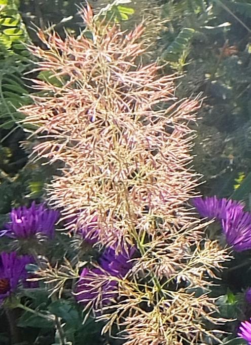 空中公園ハイラインで見かけた秋の植物_b0007805_05564491.jpg