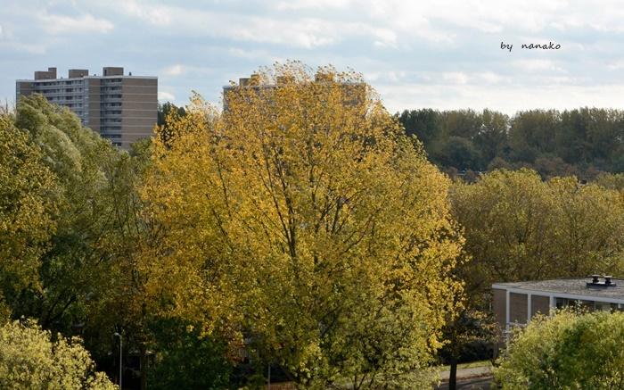 秋色のアムステルダム_a0153807_23095538.jpg