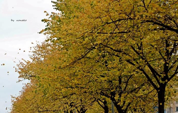 秋色のアムステルダム_a0153807_23105566.jpg