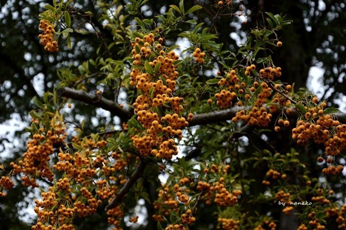 秋色のアムステルダム_a0153807_23164067.jpg