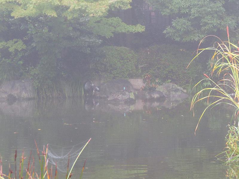 10月 通勤・お散歩 撮影_f0051915_21004956.jpg