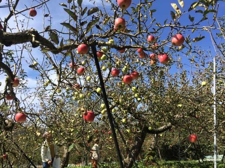 毎年恒例親睦会・リンゴ狩り&バーベキューの巻_e0036217_01523896.jpg