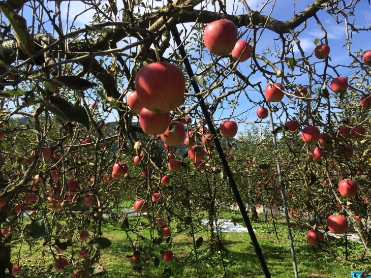 毎年恒例親睦会・リンゴ狩り&バーベキューの巻_e0036217_01534470.jpg