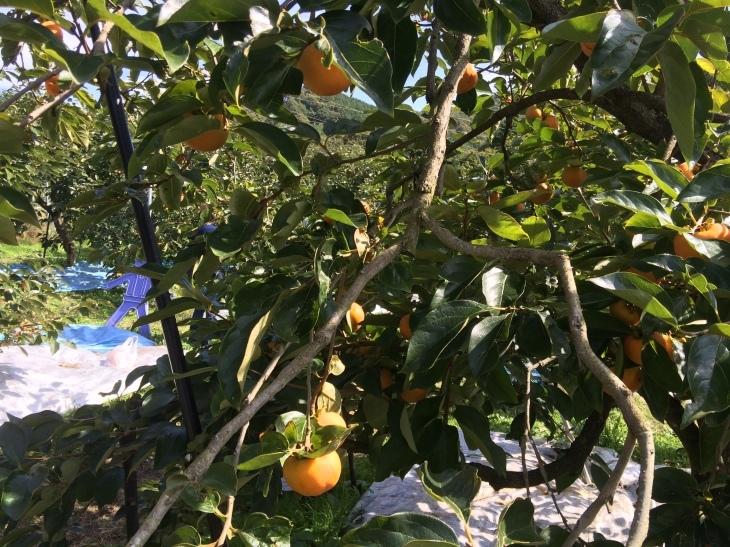 毎年恒例親睦会・リンゴ狩り&バーベキューの巻_e0036217_01543488.jpg