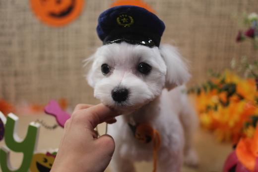10月31日ご来店のワンちゃんです!!_b0130018_09281979.jpg