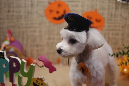 10月31日ご来店のワンちゃんです!!_b0130018_09282658.jpg