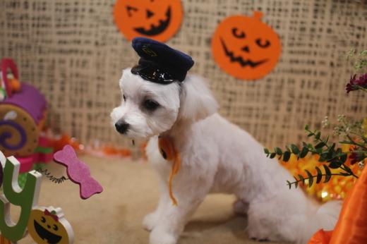 10月31日ご来店のワンちゃんです!!_b0130018_09285802.jpg