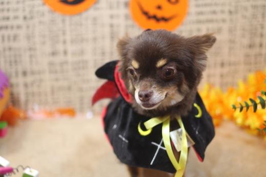 10月31日ご来店のワンちゃんです!!_b0130018_09291346.jpg