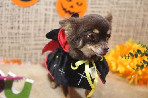 10月31日ご来店のワンちゃんです!!_b0130018_09291803.jpg