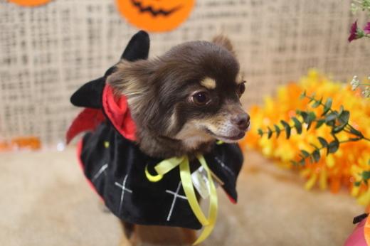 10月31日ご来店のワンちゃんです!!_b0130018_09292604.jpg